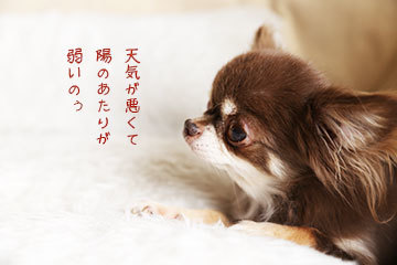 IMG_6119.jpg