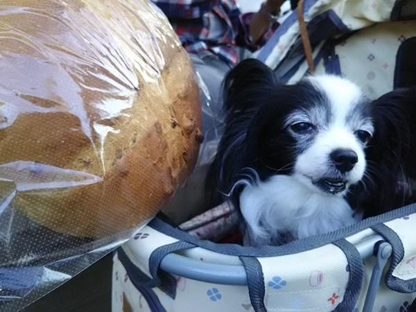 でっかいくるみパン