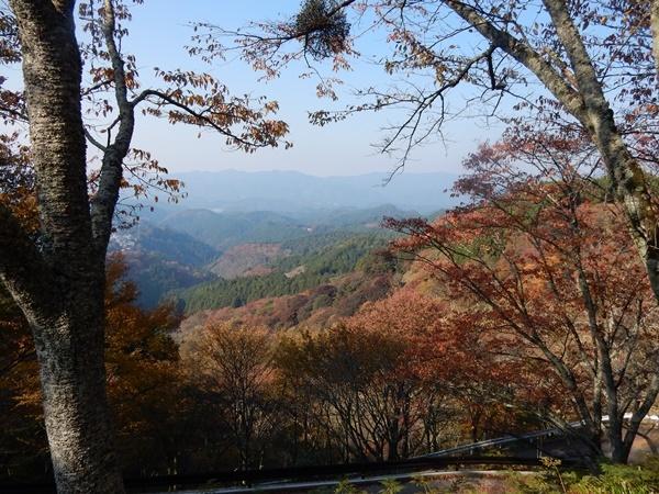 山桜の紅葉2