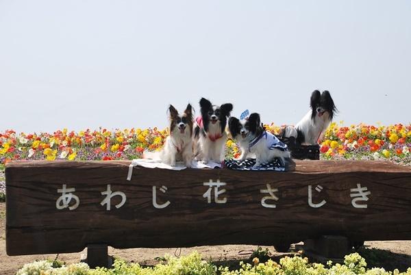 2015-5あわじ花さじきへ1