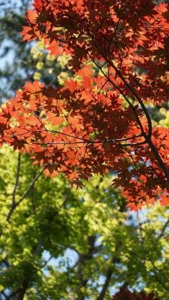 autumn-leaves-782212_960_720.jpg