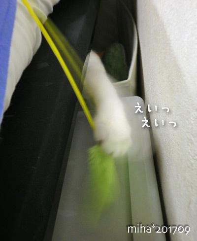 miha17-09-141a.jpg