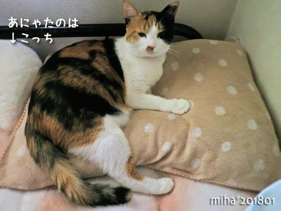 miha18-01-26.jpg