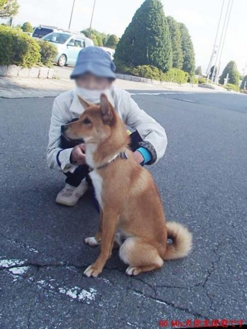 06 Mix犬虎太郎君です