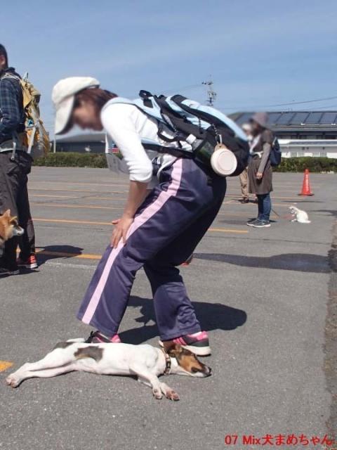 07 Mix犬まめちゃん