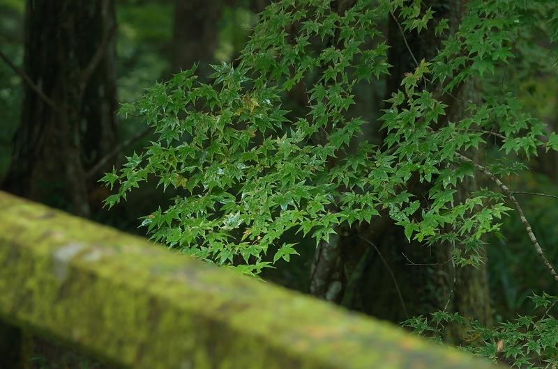雨の小國神社 2