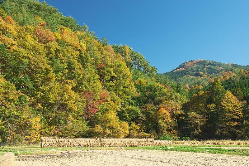 色づく秋 実りの秋