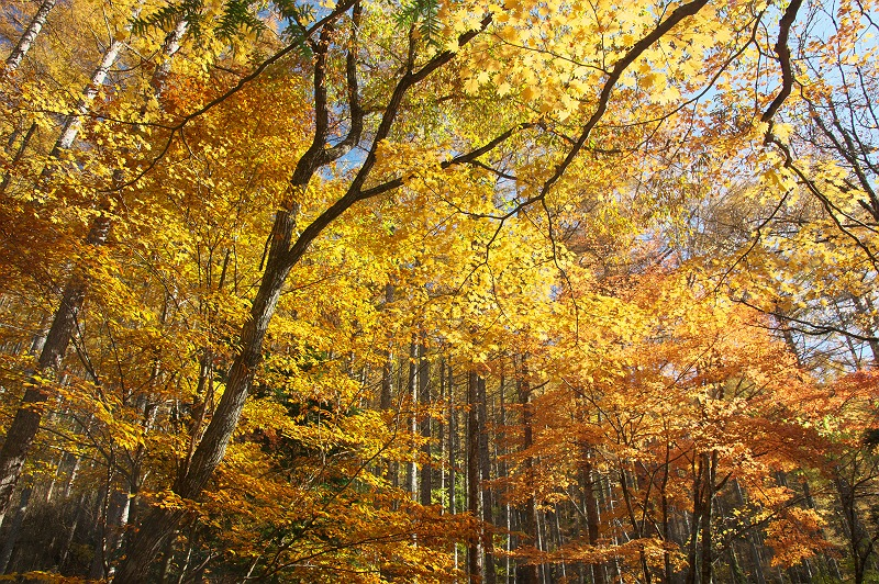 華やぐ秋に
