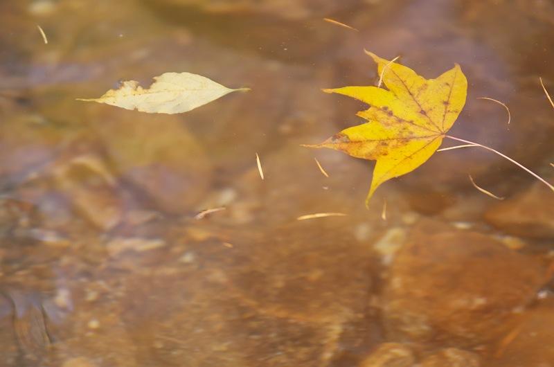 華やぐ秋に 2