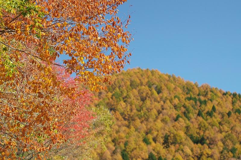 売木村の秋