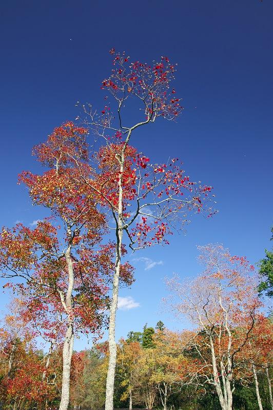 秋色の公園 2