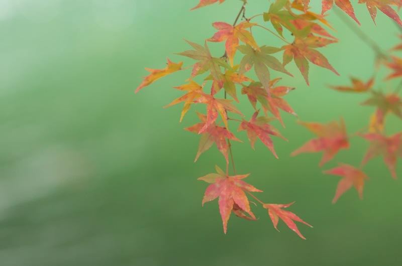 流れゆく秋に 三