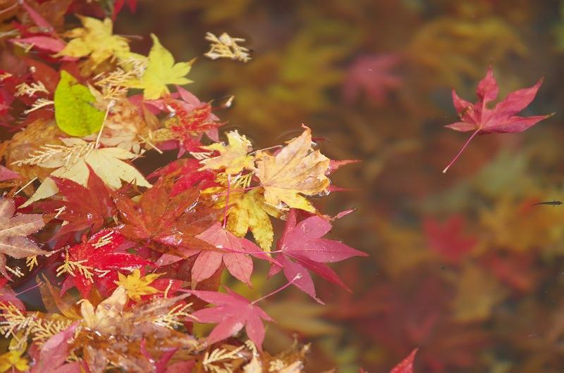 流れゆく秋に 2