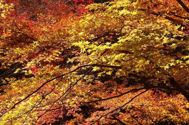 流れゆく秋に 3