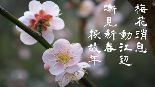 梅花の消息
