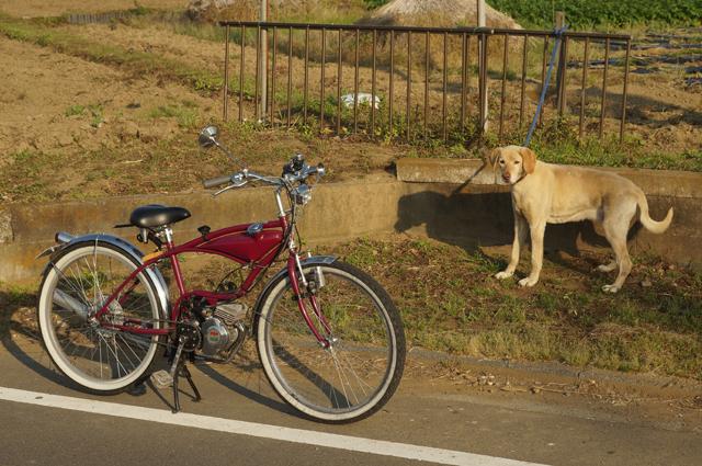 モペットと番犬