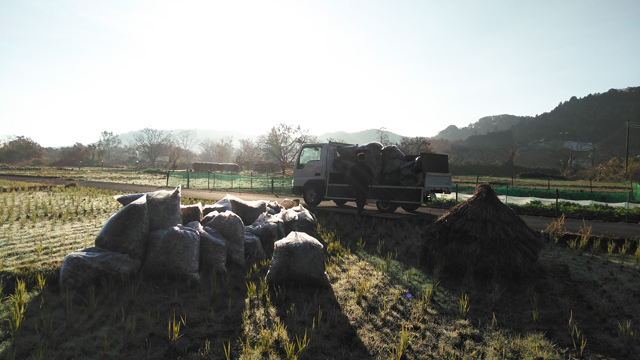 マツダのタイタン落葉をたくさん積んで朝日を浴びて