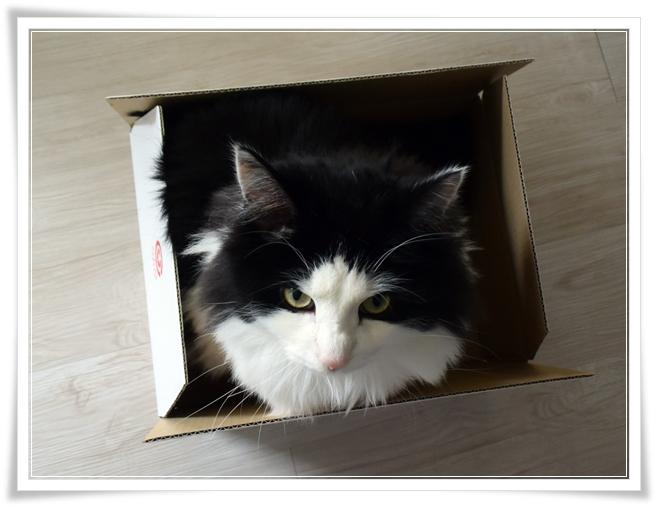 箱があると入る、ネコあるある話。(=`ェ´=)
