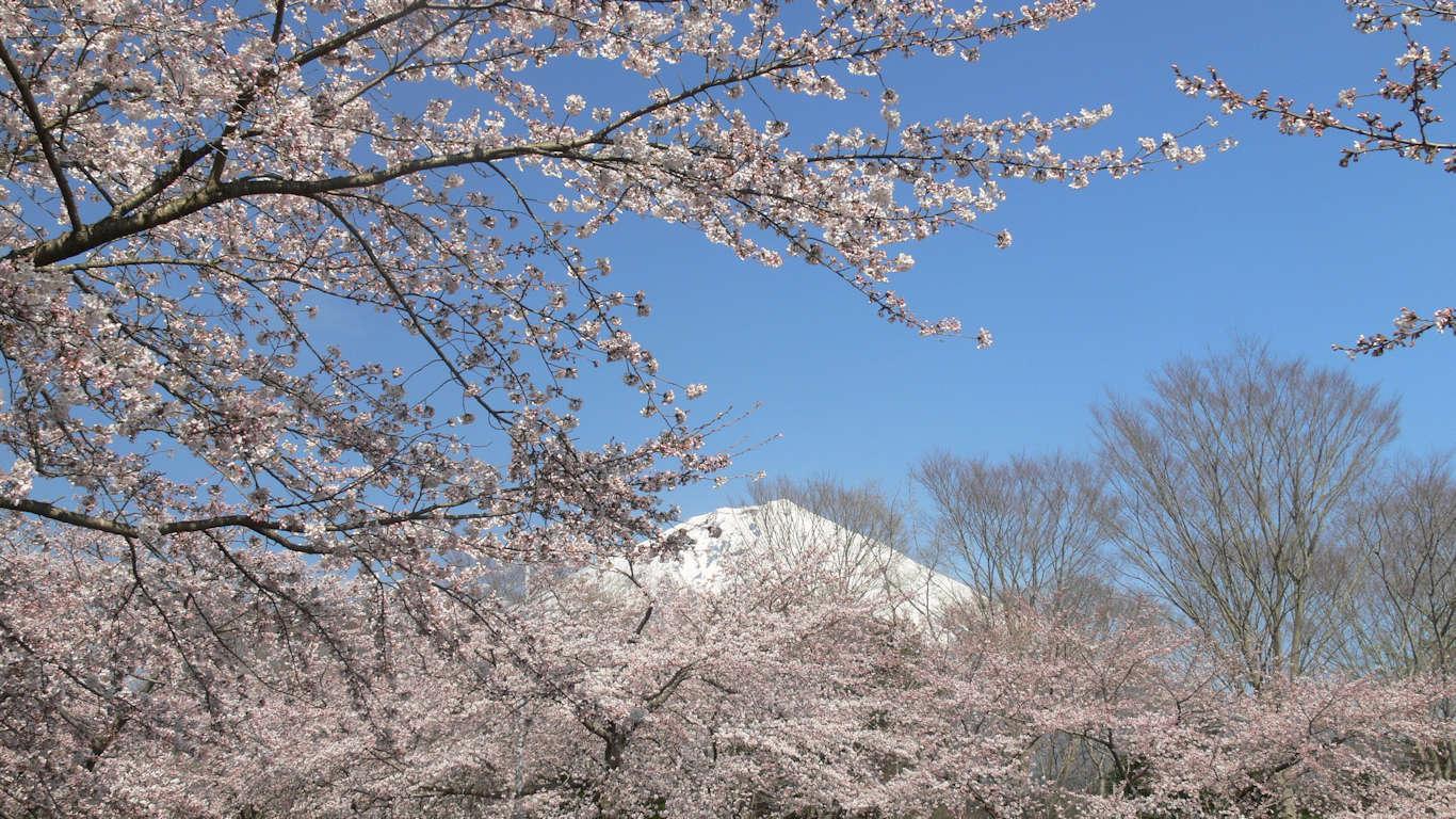 090408富士桜自然墓地公園001