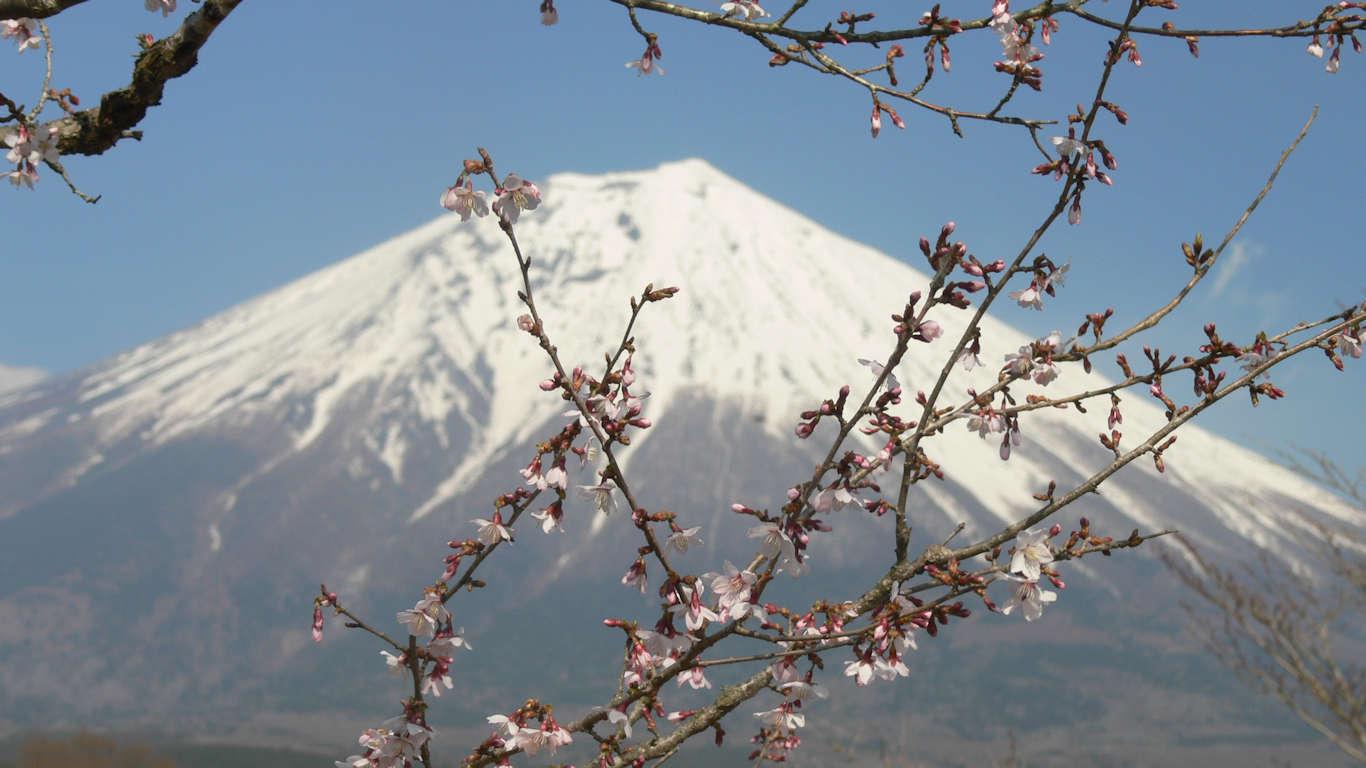 090408富士桜自然墓地公園019