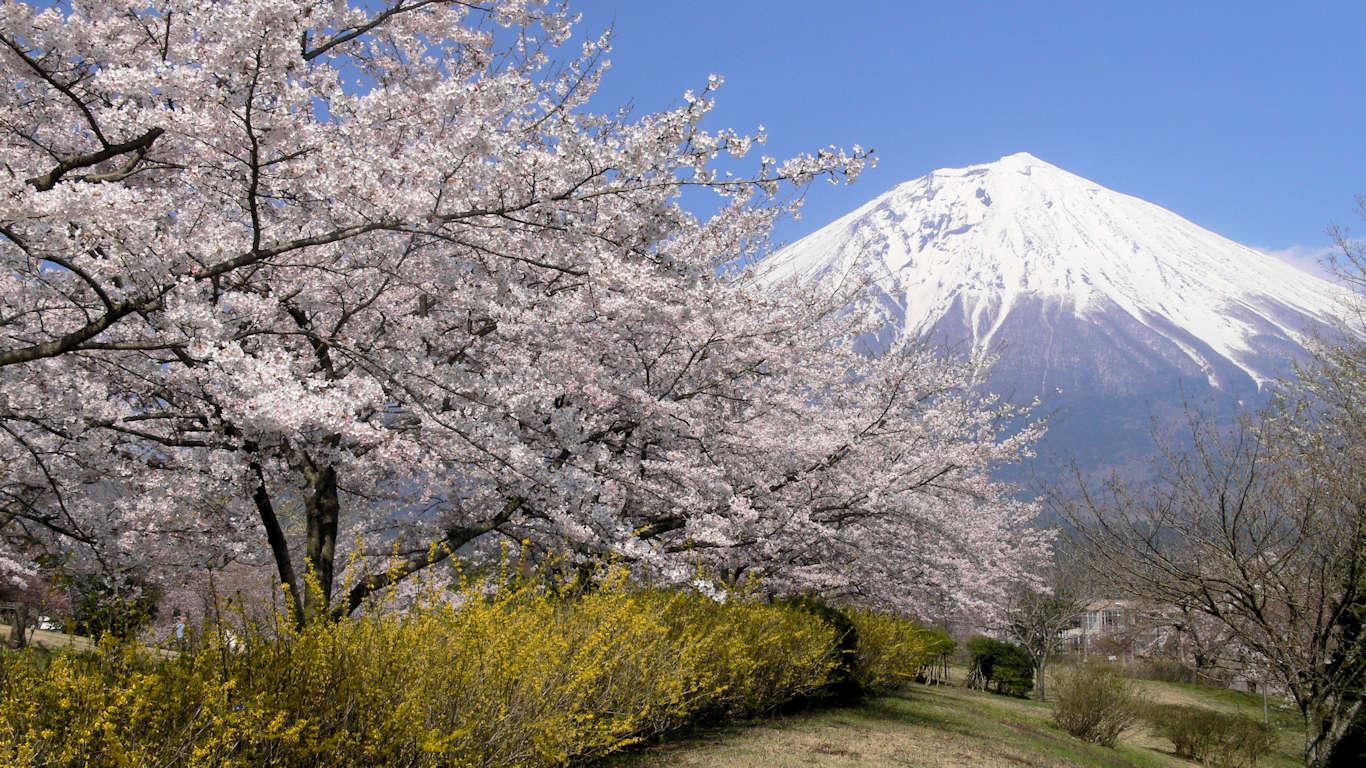 090408富士桜自然墓地公園022