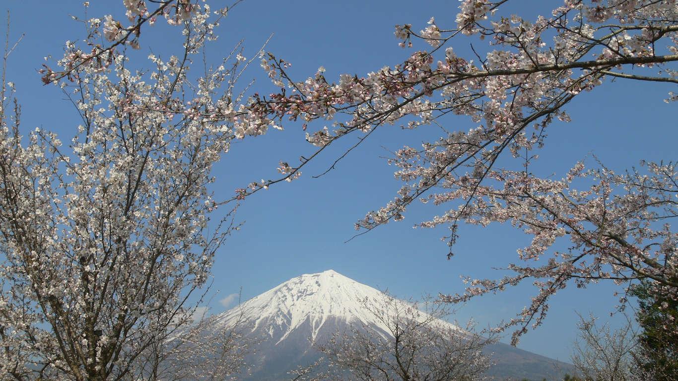 090408富士桜自然墓地公園025