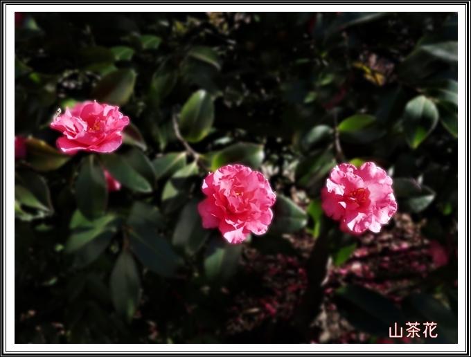 640IMG_3285s.jpg