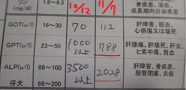 PB080066.jpg