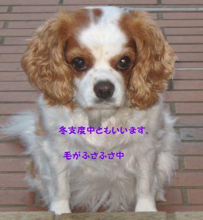 IMG_0220[1]