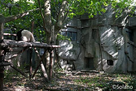 日陰のジャングルジムの上で眠る子パンダ
