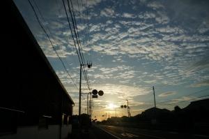 朝日とカラス2