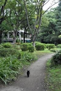 Kuu The Cat