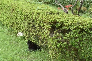 Cat Duo Junko and Jun