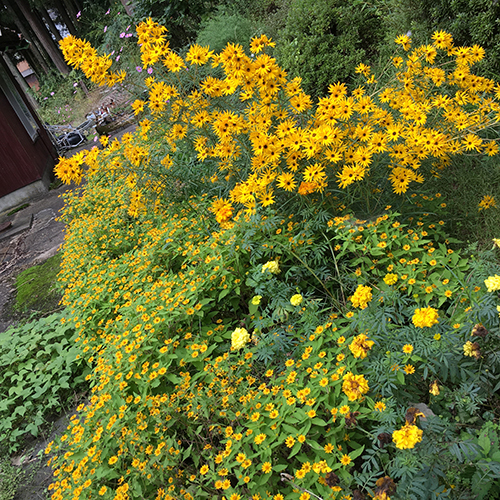 裏庭の花壇2017