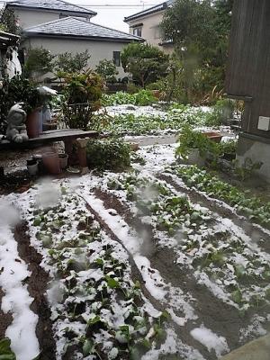 20171119初雪