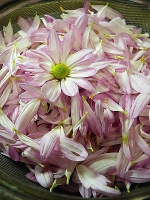 17年10月23日食用菊