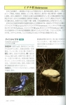 青森県産きのこ図鑑2