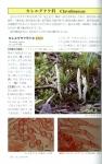 青森県産きのこ図鑑5