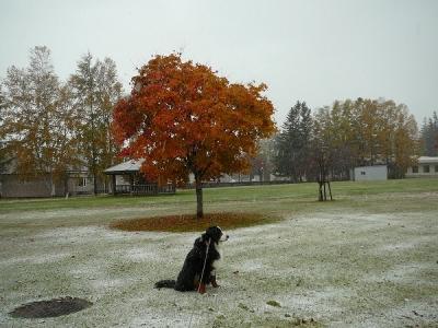 紅葉雪景色