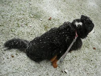 風雪に耐える?