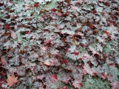 落ち葉に雪化粧