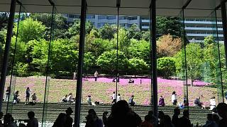 20170423芝桜(その13)