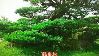 20170426栗林公園(その4)