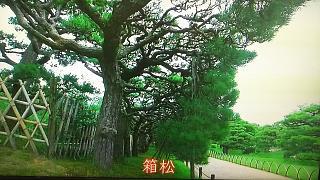 20170426栗林公園(その5)