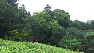20170916修学院離宮(その63)