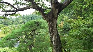 20170916修学院離宮(その73)