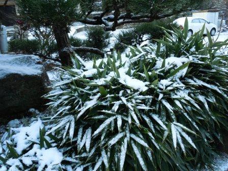 積雪22(2018-01-12)