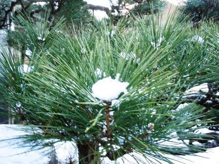 積雪23(2018-01-12)