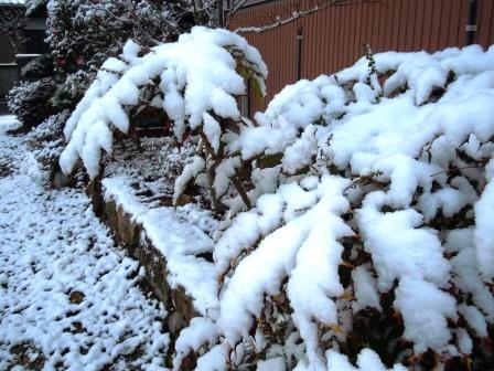 積雪5(2018-01-11)