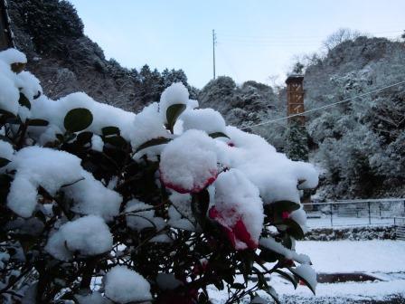 積雪6(2018-01-11)